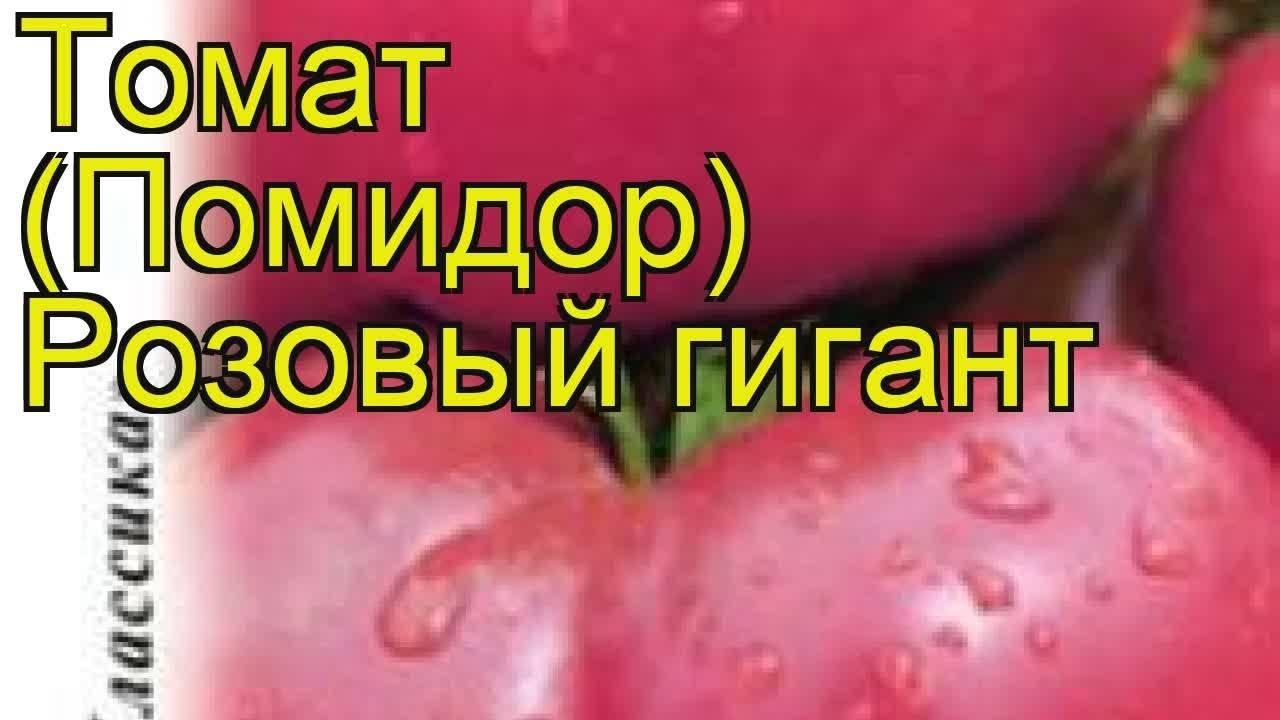 Помидоры розовый гигант выращивание - садоводству да