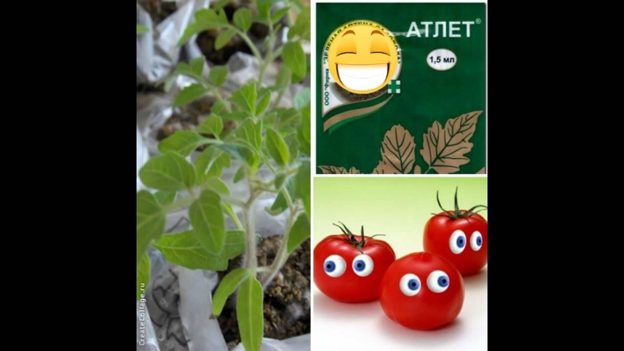 Чем подкормить рассаду помидоров: эффективные удобрения, сроки, схемы, после всходов, до и после пикировки