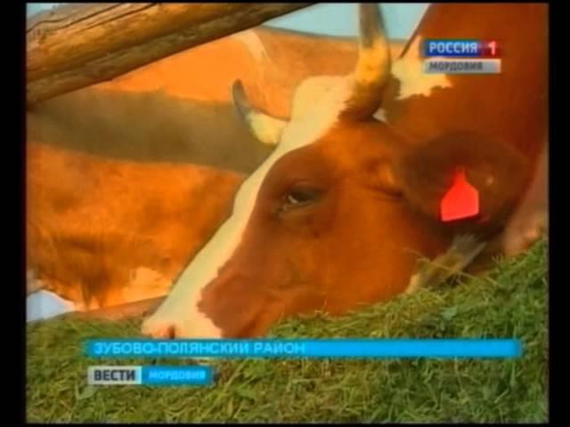 Кормление коров – нормы и рационы для крс 2021