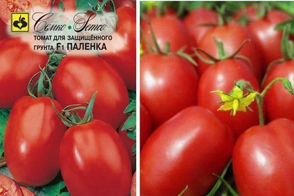 Томат паленка: особенности сорта, описание, урожайность, отзывы