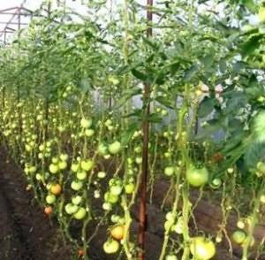 Формирование томатов в теплице: схема формировки