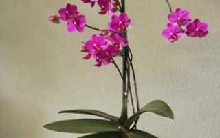 Грунт для орхидей: какой субстрат выбрать, лучший состав для фаленопсиса при посадке, как собрать своими руками, отзывы