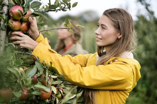 Почему яблоня не цветет и не плодоносит: причины и что делать