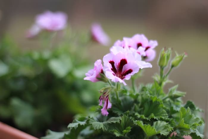 Тонкости ухода за малиной – обрезка по сезонам
