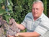 Виноград калашниковых в поселке кинельском - 33 квадратных метра