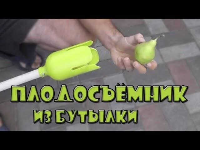 Приспособление для сбора яблок своими руками. как сделать плодосъемник для яблок?