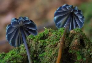 Необычные грибы: фото и названия