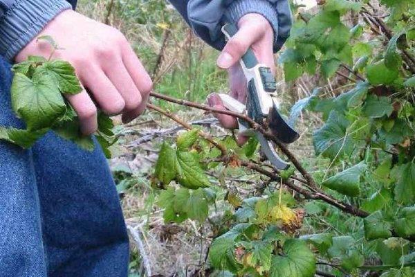 Искореняющая обработка сада осенью: чем опрыскивать деревья и кустарники от болезней и вредителей