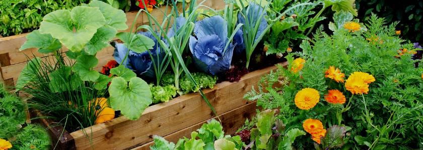 Рядом с чем можно сажать лук: что посадить с ним вместе на одной грядке, а также с какими соседями и после каких культур овощ растет плохо?