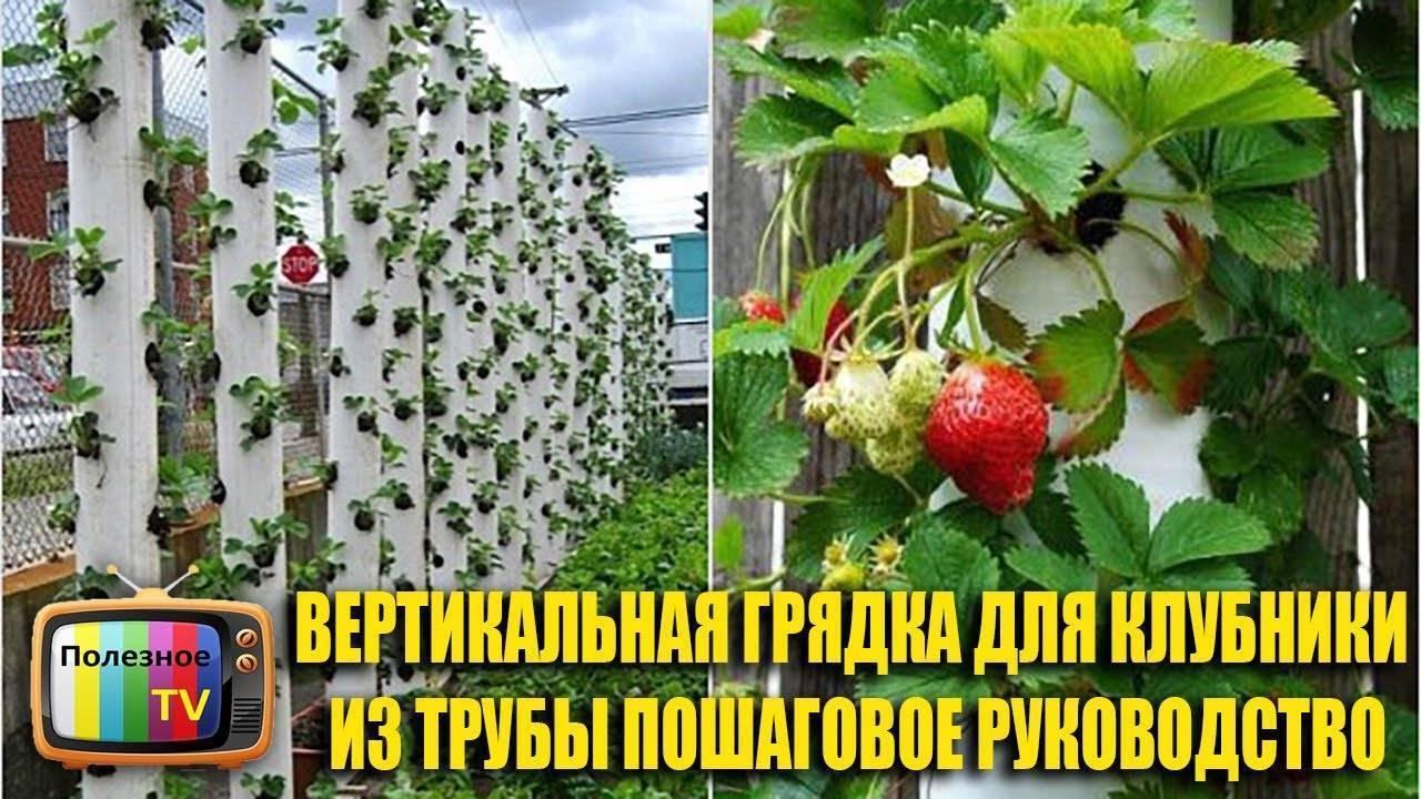 Выращивание клубники вертикальным способом, в том числе в пластиковых бутылках, а также особенности полива