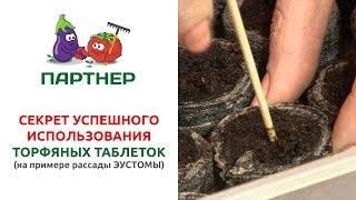Помидоры в торфяных таблетках – особенности выращивания рассады
