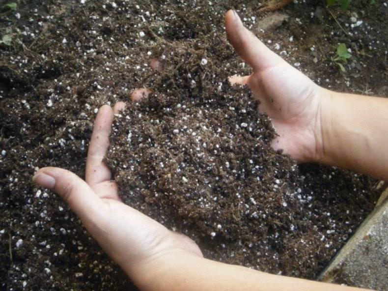 Что такое фосфорные удобрения и как их использовать в саду и в цветнике