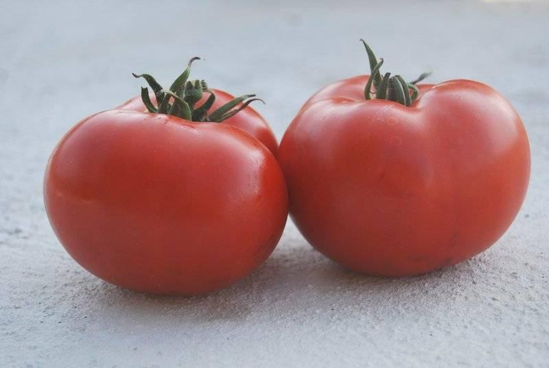Характеристика и подробное описание сорта томатов никола
