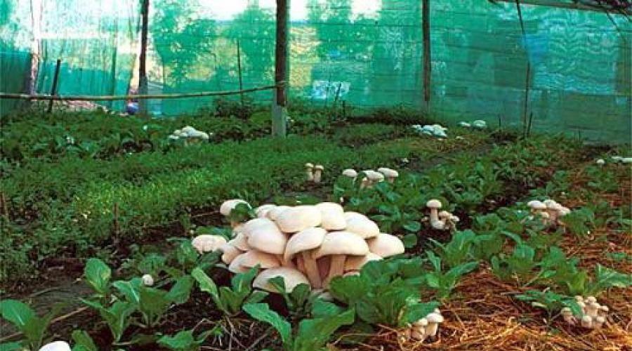 Выращивание грибов на бревнах