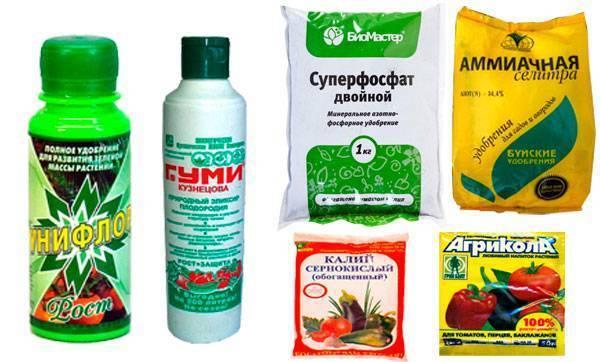Чем полить перец, чтобы лучше рос? как подкормить для роста народными средствами? чем поливать в теплице и открытом грунте болгарский перец?