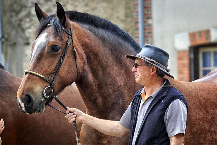 Лошади аппалуза: фото, история, внешний вид, характеристики, уход