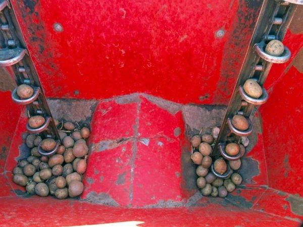 Картофелесажалка для мотоблока – главный помощник при посадке картофеля