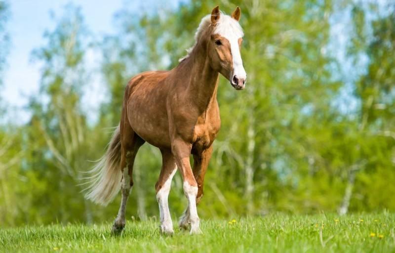 Сколько живут лошади: продолжительность жизни, фото