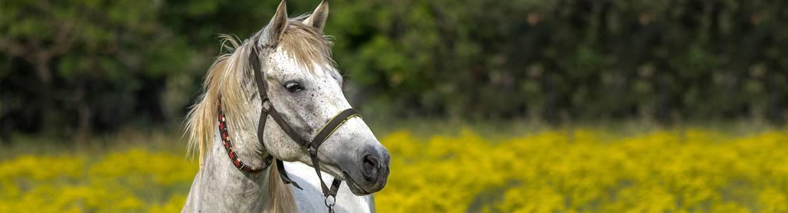Все интересные факты о лошадях
