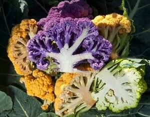 Сорта цветной капусты с описанием и фото