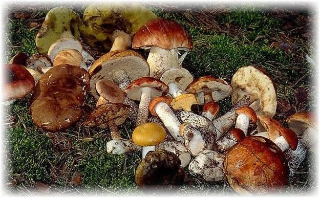 Простая сушка белых грибов в домашних условиях