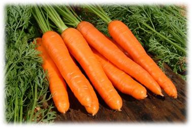 Какие витамины содержатся в моркови, какие витамины в морковке, что содержит