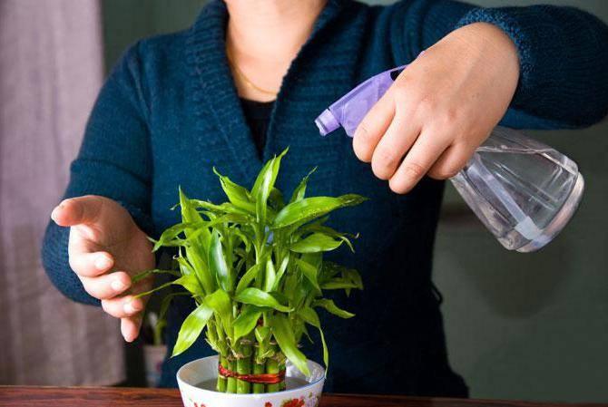 Подкормка комнатных цветов перекисью водорода