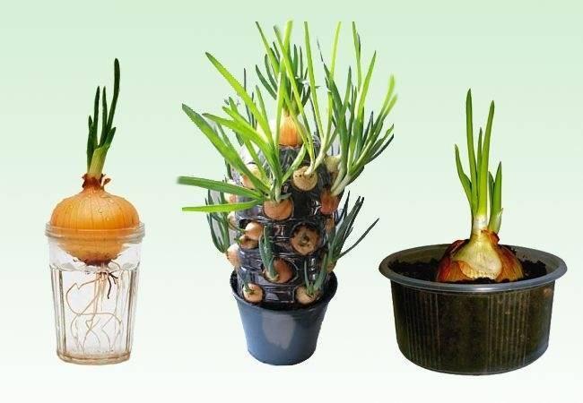 Руководство по успешному выращиванию зелени на подоконнике: как получать урожай даже зимой