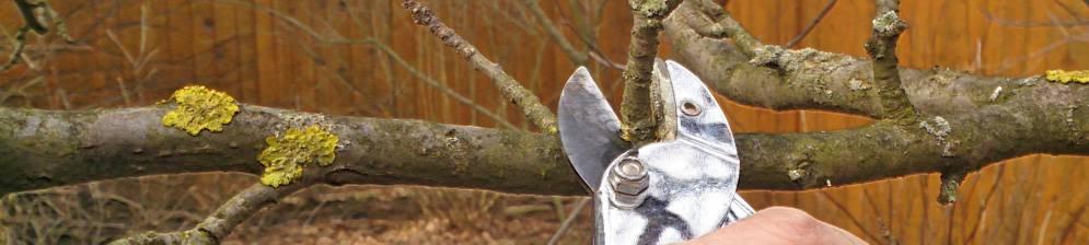 А вы знаете, как обрезать яблоню правильно?   спутниковые технологии