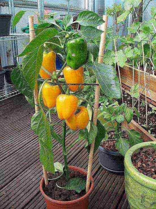 Овощи на балконе: 5 секретов урожая. грядки на подоконнике - секреты правильного ухода за растениями