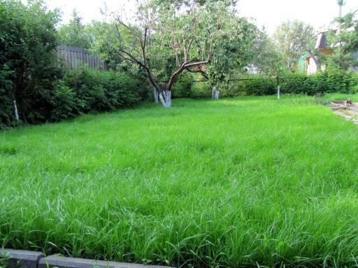 Когда сеять газонную траву: осенью или весной, и как подготовить площадку