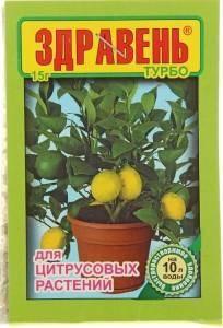 Уход за цитрусовыми растениями – полив и подкормка, освещение и воздух
