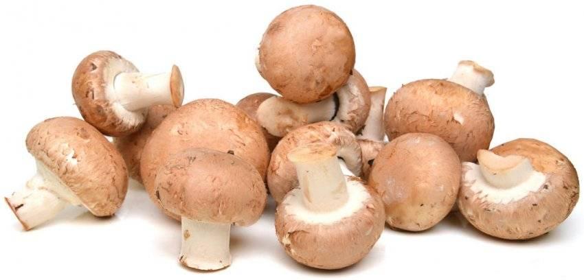 ✅ королевские шампиньоны: чем отличаются от обычных белых, грибы с коричневой шляпкой - tehnoyug.com