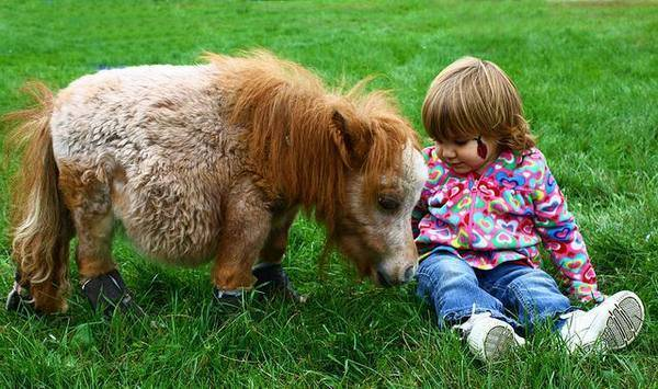 Мини лошади: происхождение, уход и содержание, породы