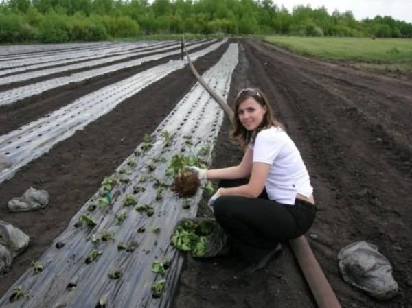 Когда садить (сеять) помидоры на рассаду в 2021 году в сибири