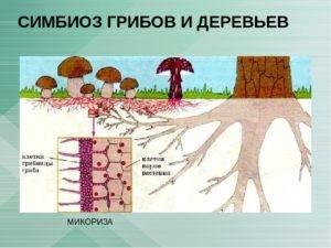 Симбиоз | справочник пестициды.ru