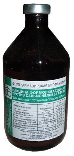 Сальмонеллез телят: описание, лечение, вакцина