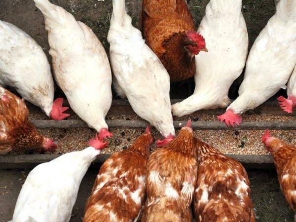 Инструкции по изготовлению своими руками различных кормушек для кур