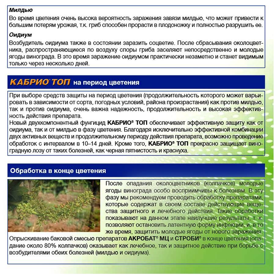 Баковые смеси для винограда: примеры, обработка и защита