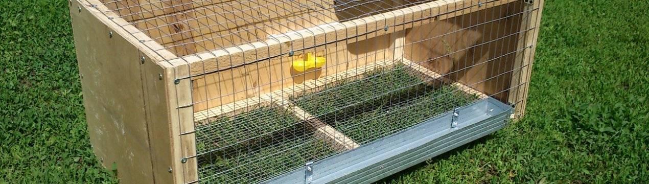 Как сделать клетку для цыплят своими руками: фото и пошаговая инструкция как сделать клетку для цыплят своими руками: фото и пошаговая инструкция