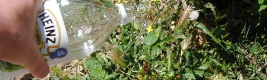 Уксус, соль и мыло от сорняков. как использовать уксус на огороде