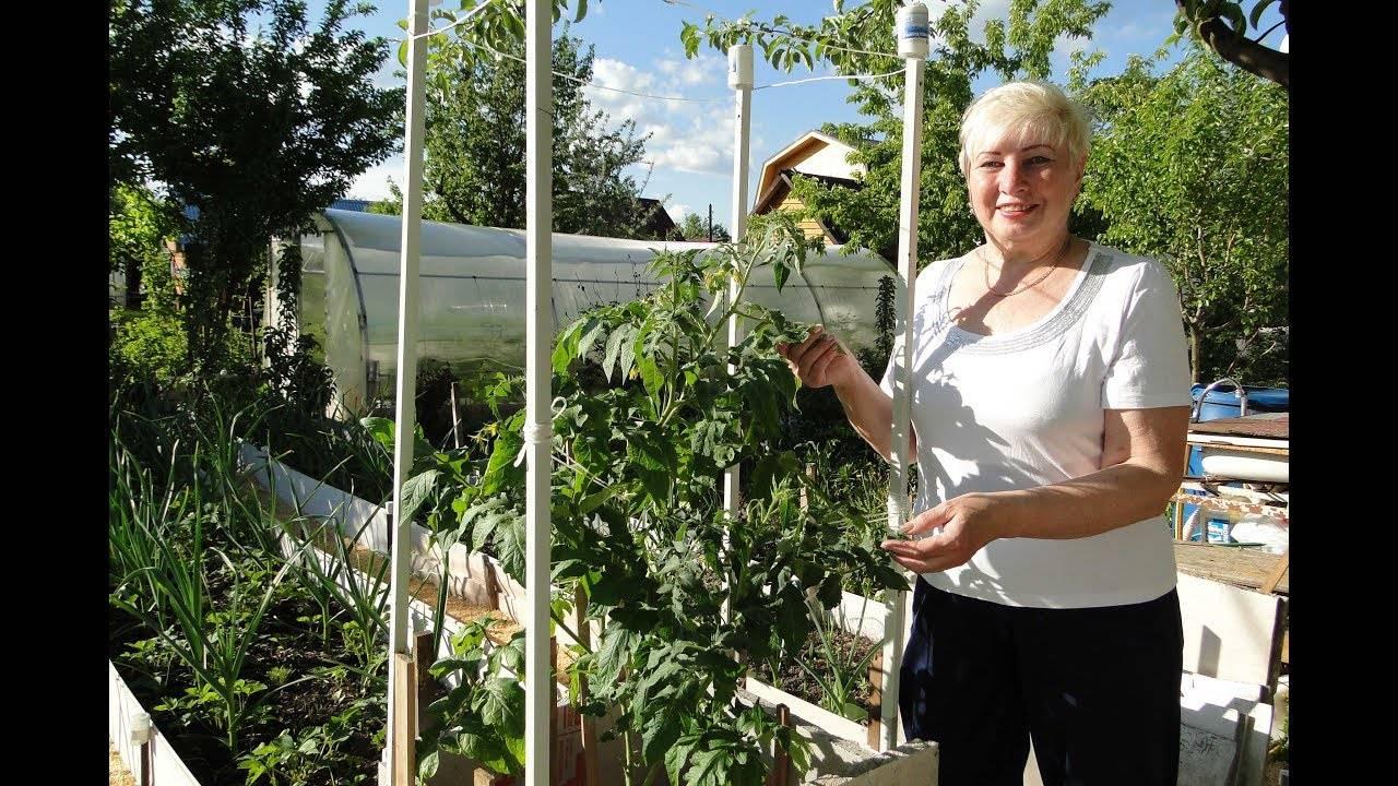 Как правильно вырастить помидорное дерево в домашних условиях?