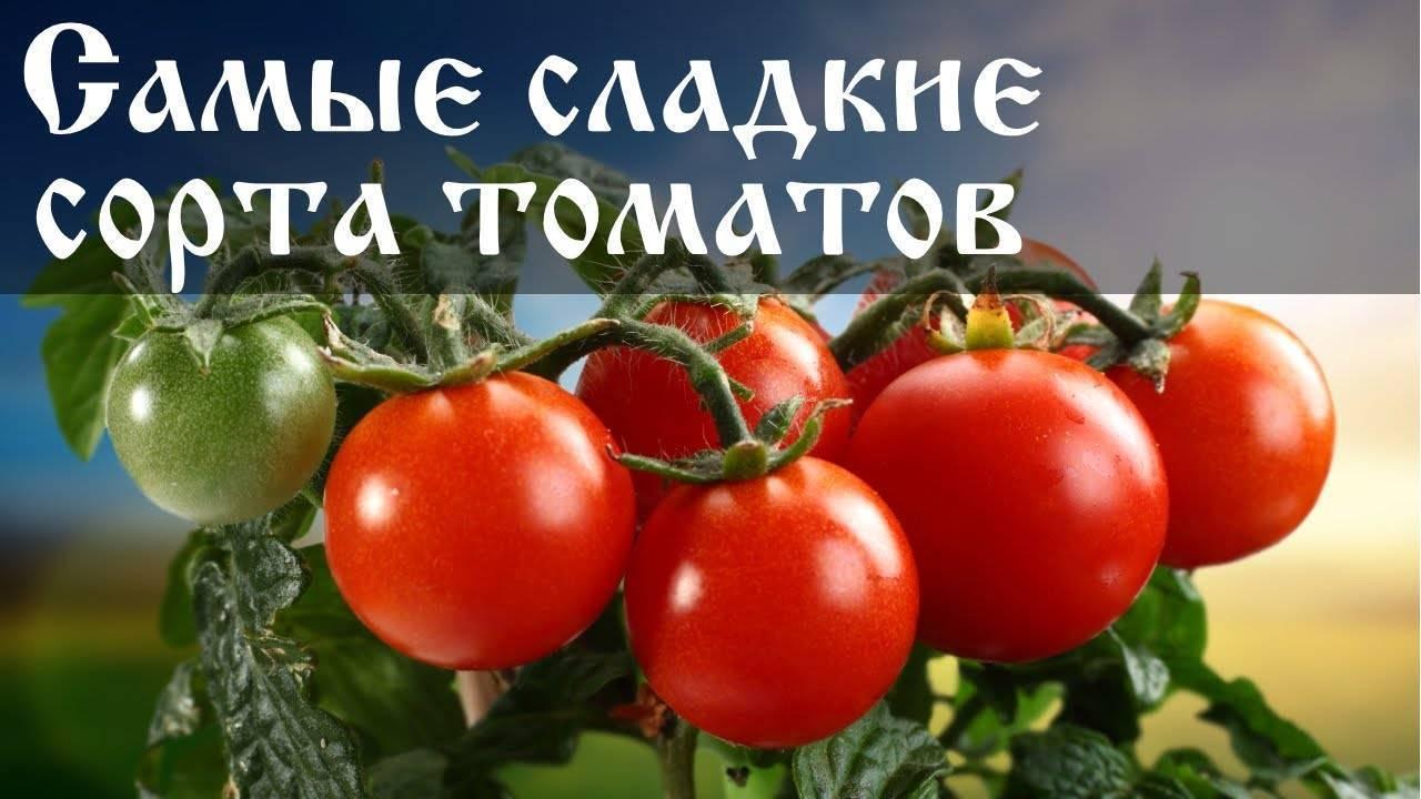 Лучшие сорта высокорослых томатов