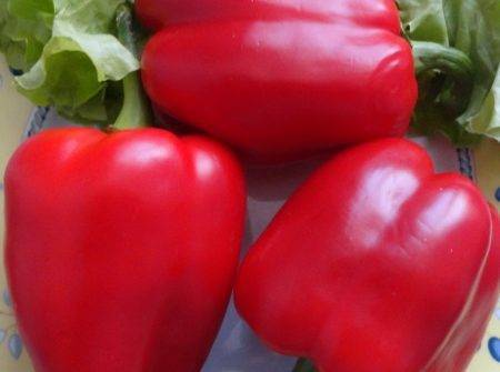 Лучшие сорта перца для ленинградской области: описание и характеристика, фото
