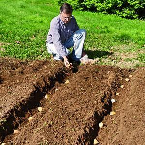 Урожайность картофеля с 1 га и с 1 сотки земли по регионам