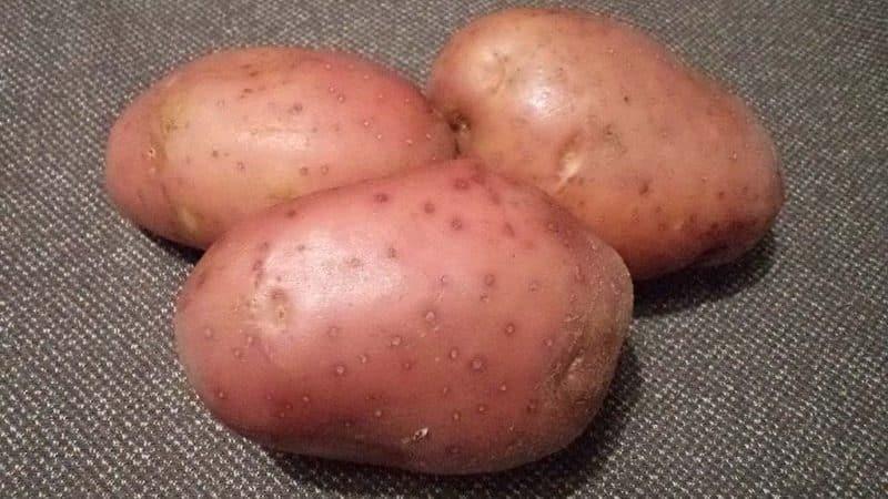Описание сорта картофеля ред фэнтези