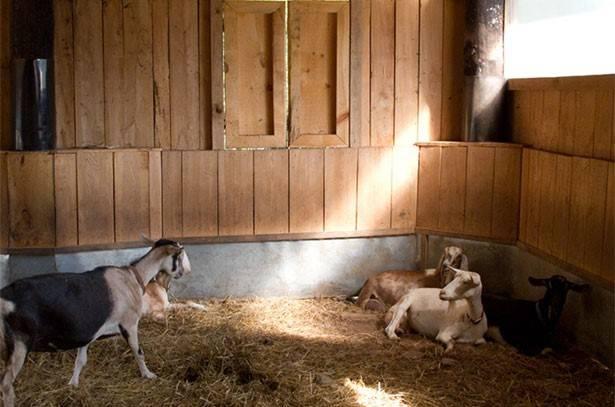 Сарай для коз: подготовка оптимального помещения, требования