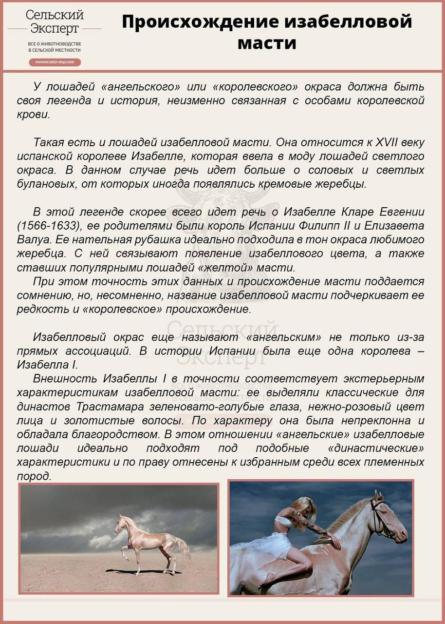 Буланая масть лошади: описание фото   мои лошадки