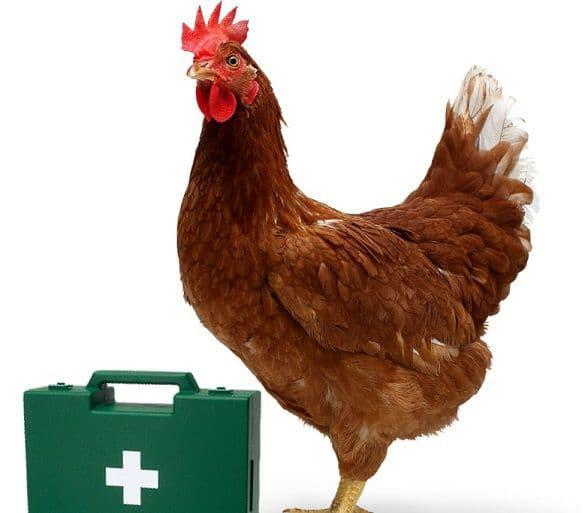 Антибиотики для кур — какие выбрать, как использовать, дозировка, рекомендации по применению, профилактика и лечение