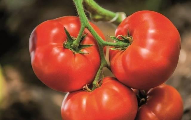 Биф-томаты: что это такое, характеристика и описание сортов, чем отличается этот вид, как их выращивать